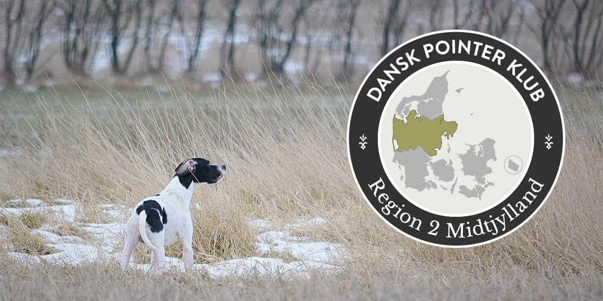 Dansk Pointer Klub fællestræning Region 2