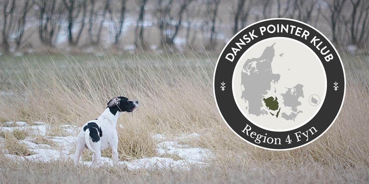Dansk Pointer Klub fællestræning Region 4