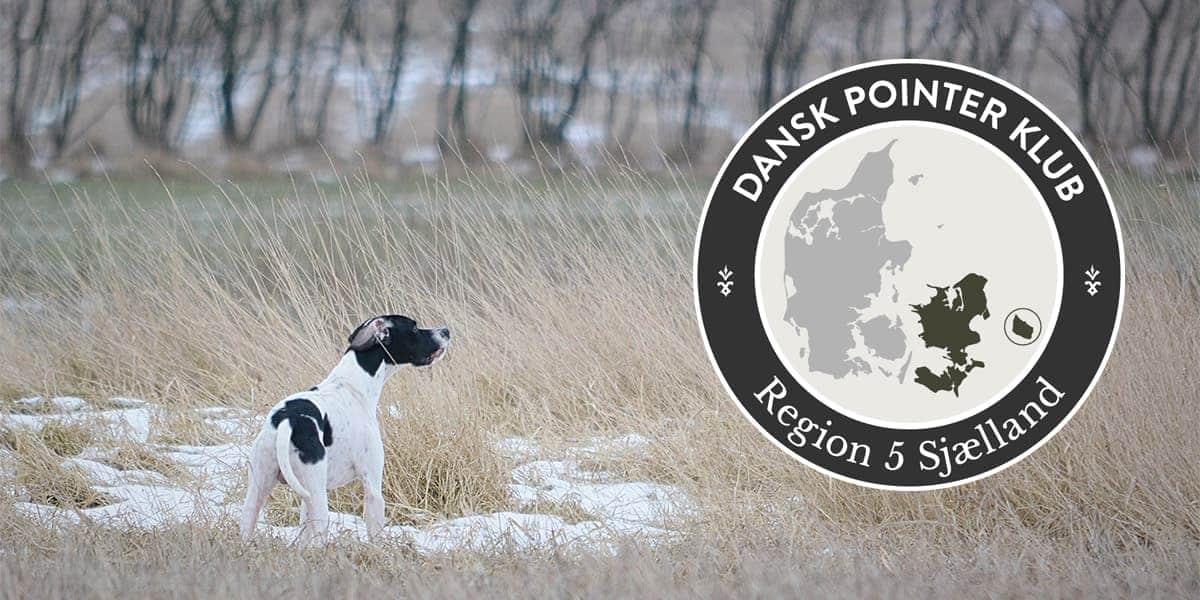 Dansk Pointer Klub fællestræning Region 5