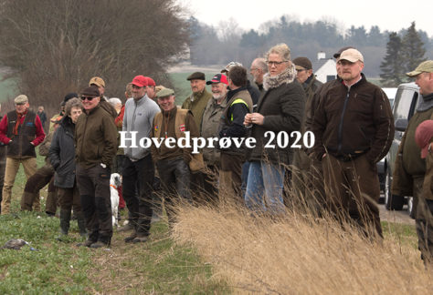 Dansk Pointer Klubs Hovedprøve 2020