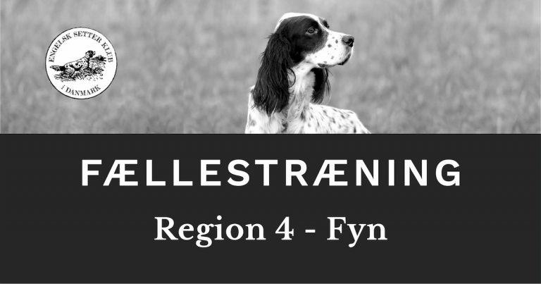 ESK - Engelsk Setter Klub i Danmark vintertræning på Fyn