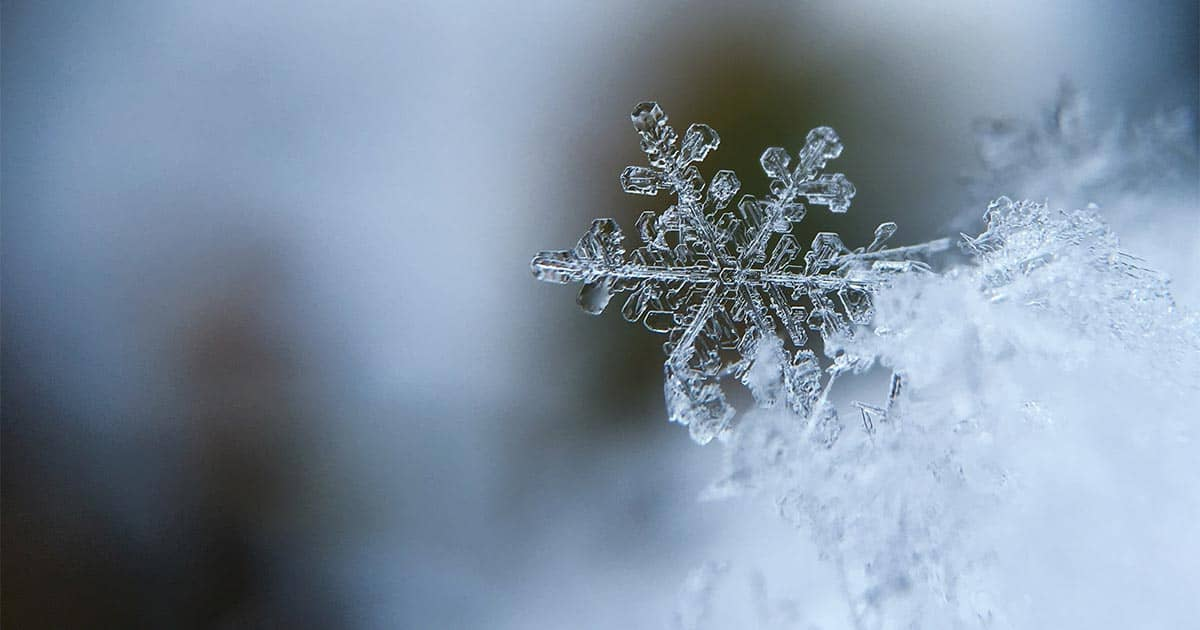 Vintermøde
