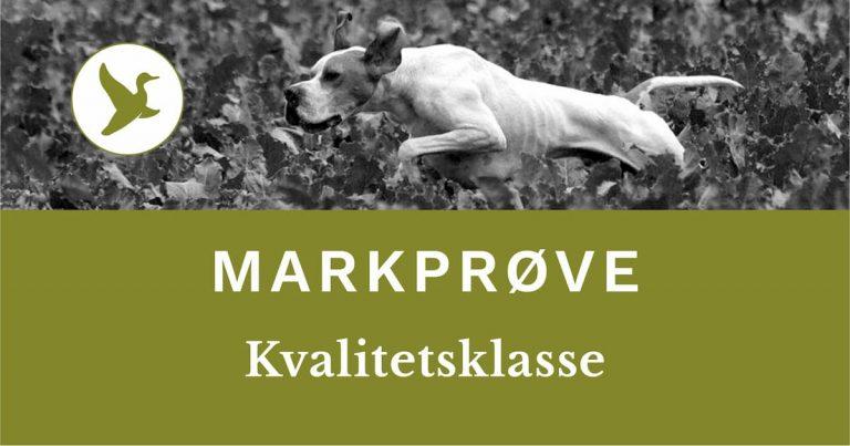 DJ - Danmarks Jægerforbunds markprøve. Kvalitetsklasse