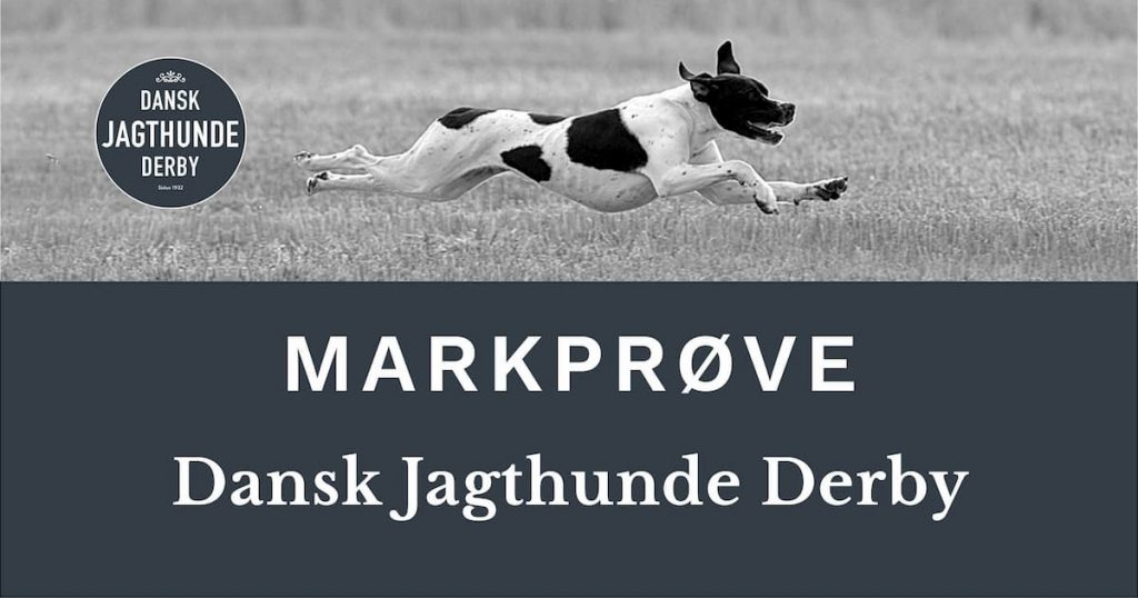 Dansk Jagthunde Derby for de 5 Engelske stående hunde racer