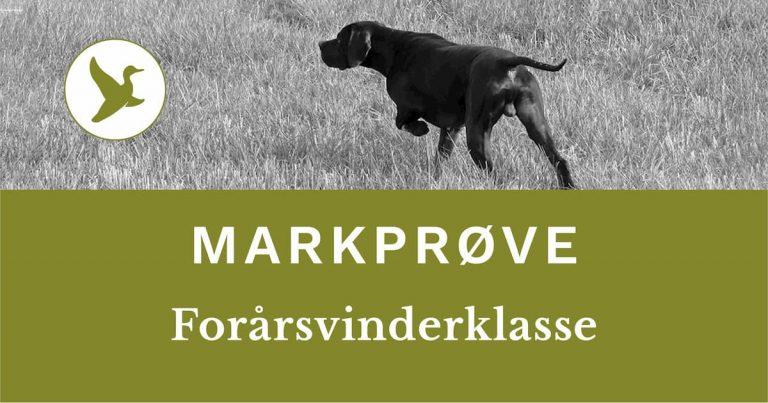 DJ - Danmarks Jægerforbunds markprøve. Forårsvinderklasse