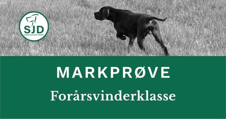 SJD - Stående Hunde i Danmark markprøve. Forårsvinderklasse