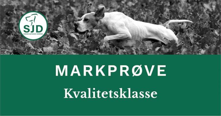 SJD - Stående Hunde i Danmark markprøve. Kvalitetsklasse