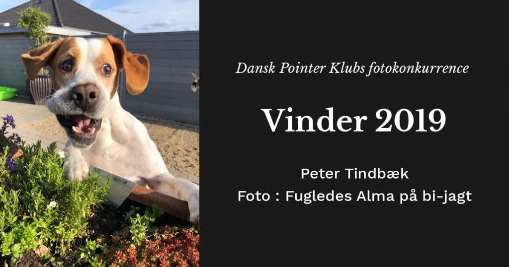 Vinder af Dansk Pointer Klubs fotokonkurrence 2019 - Peter Tindbæk og Fugledes Alma