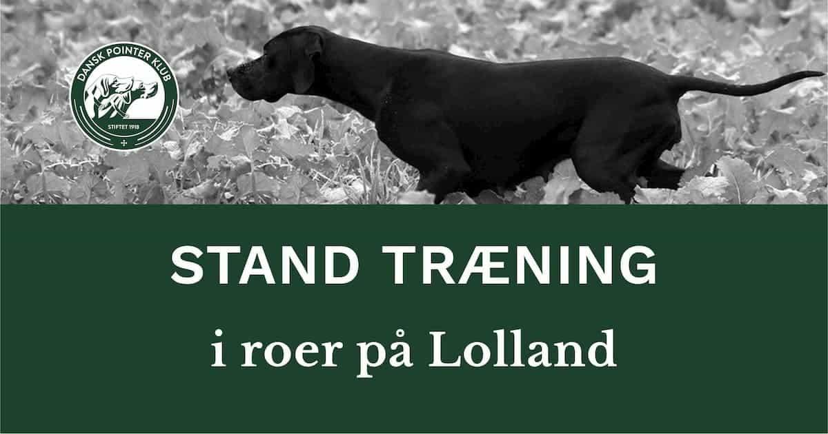 Træn stand for fugl i roer på Lolland