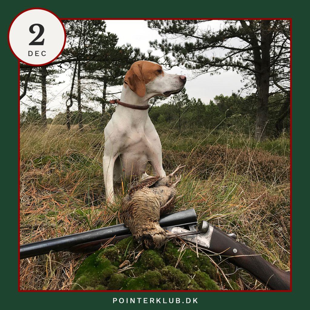 Følg Pointerklubbens jagt-adventskalender på Instagram
