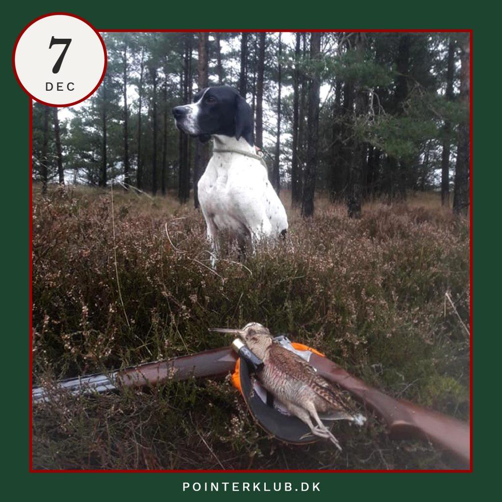 Følg Dansk Pointer Klubs jagt-adventskalenderen på Instagram.