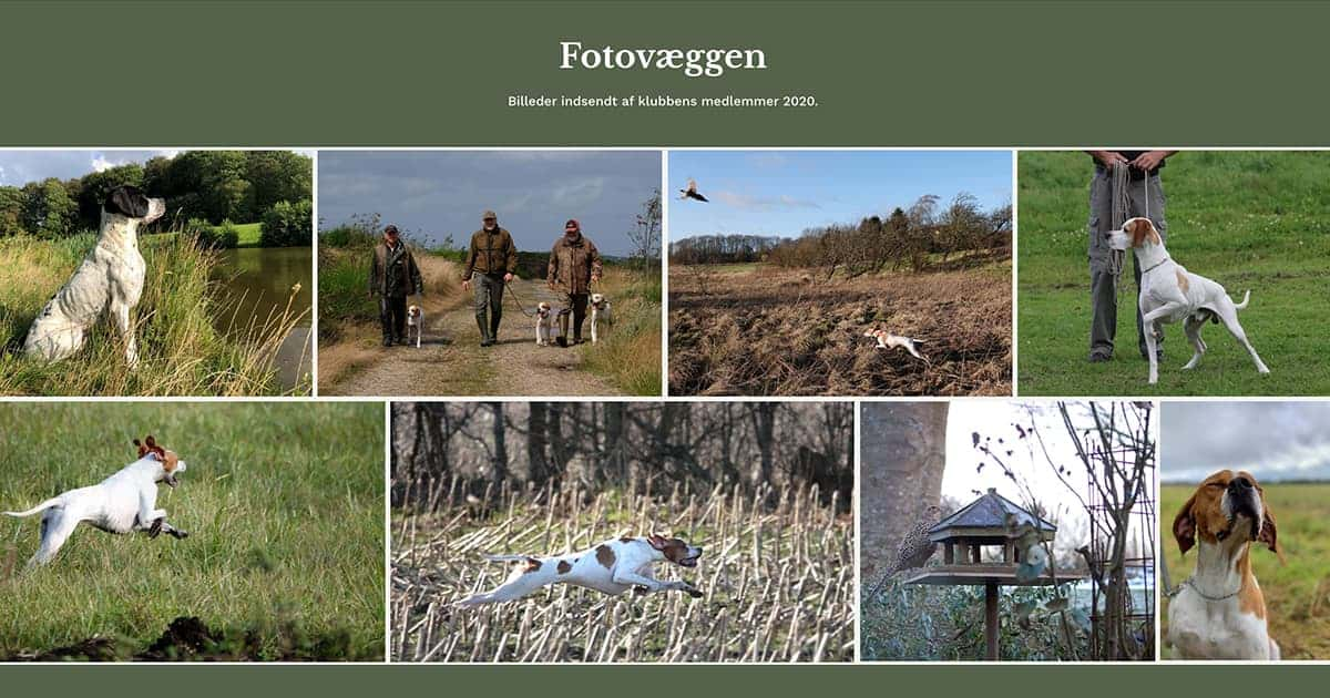 Fotovæggen medlemmernes fotos - Dansk Pointer Klub