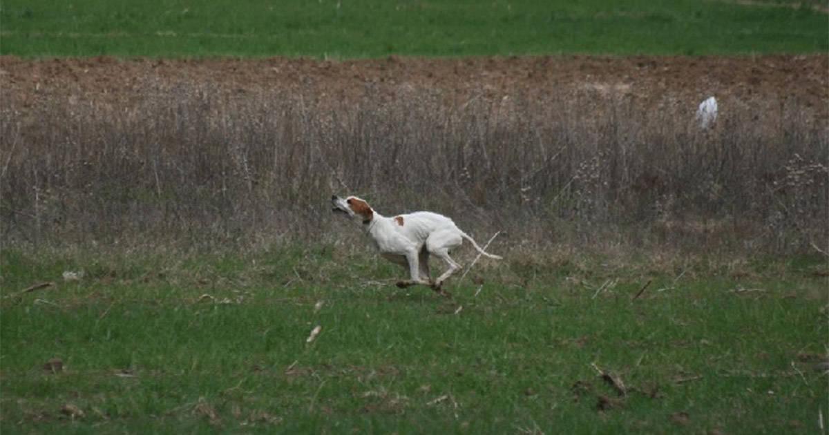 Igor løb