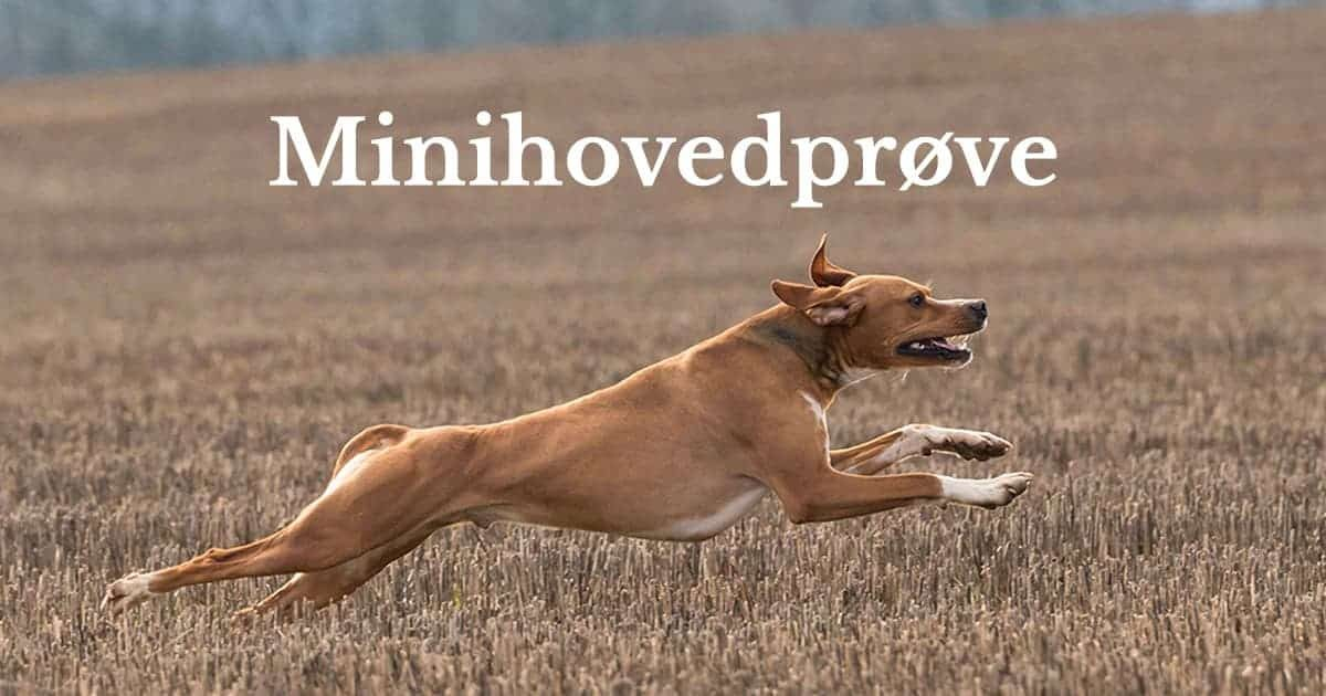 minihovedproeve