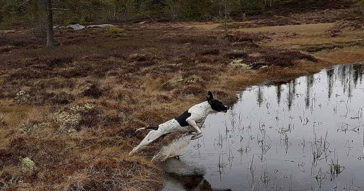 Södersjöns Sally er parret med Prick